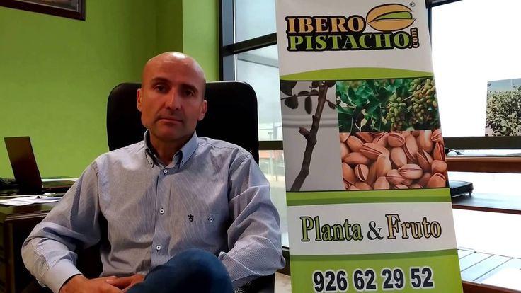 Copia de ¿El pistachero es de secano? - Preguntas Frecuentes - IberoPist...
