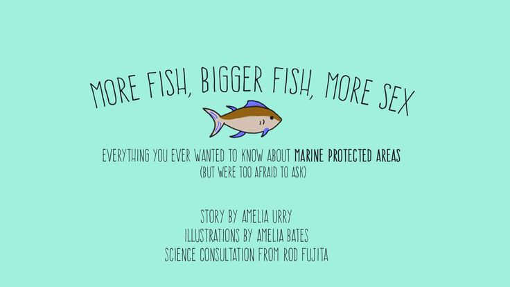 This illustrated guide makes marine protected areas fascinating  By Amelia Urry  2 Oct 2014 6:03 AM