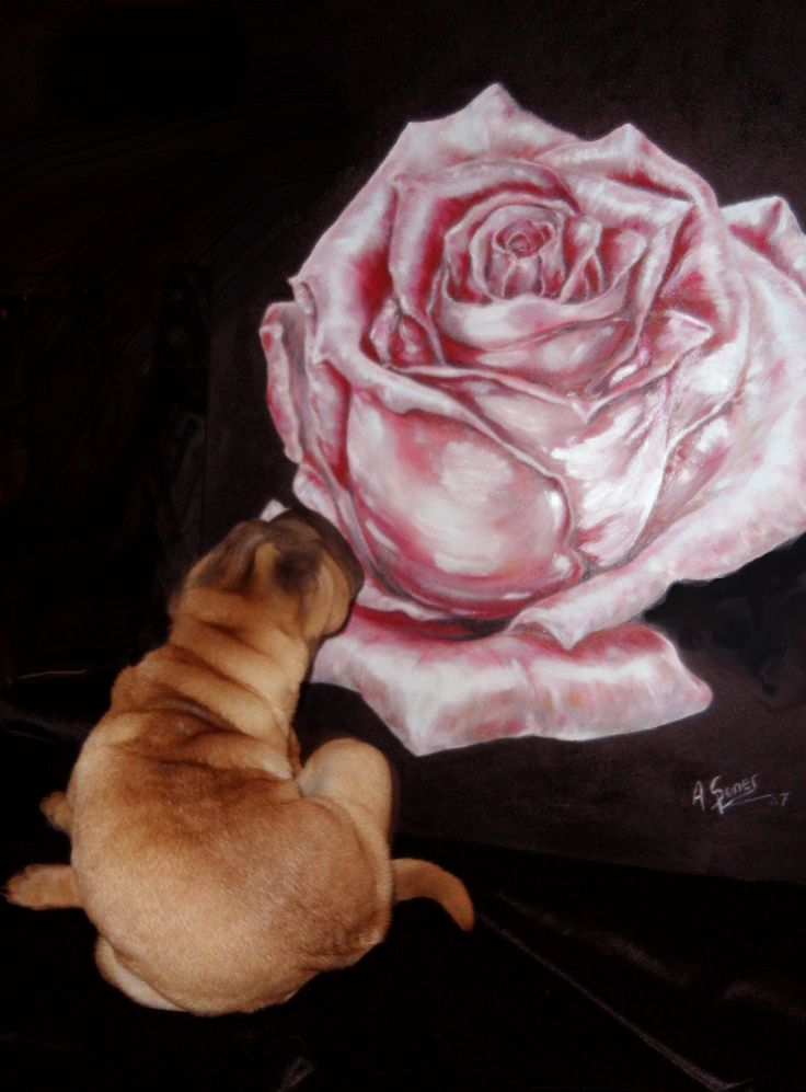 Zoey's love for roses! Blushing rose ~ Oil Painting by Canadian Artist Anna Sponer