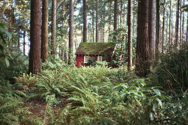Verlet Shelton, Wood, A Cozy Cottages, Little Cabin, Dreams House, Anna Verlet, Wendy House, Ferns, Portland Oregon