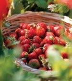 I want a strawberry garden with everbearing berries that remind me there are sweet things in life worth waiting for.