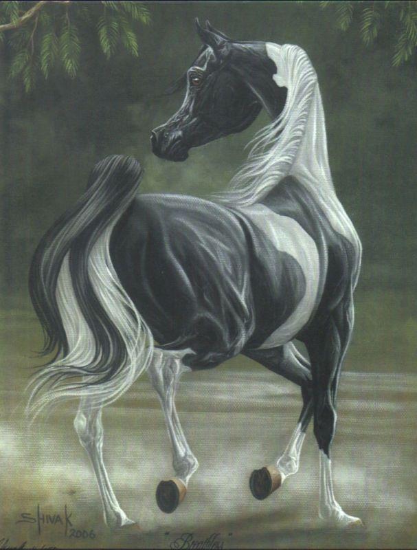 Pinto arabian - art Tracey SHIVAK Anderson