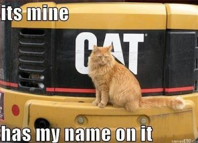 "* * "" It's mine.  Has my name on it."" * * GOTTA PAW IT TO THE CAT, HE'S RIGHT!"