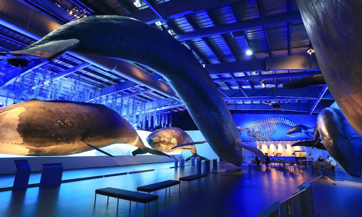 Whales of Iceland is the biggest whale exhibition in the world. I recommend you check it out! @whalesoficeland