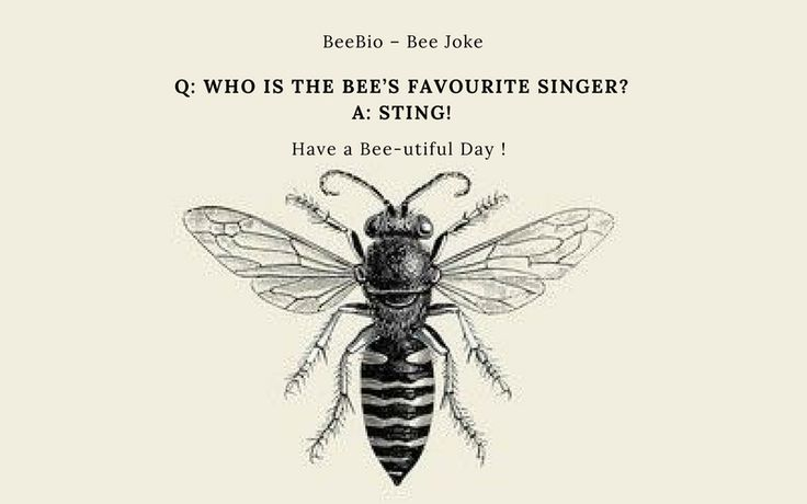Bee Joke