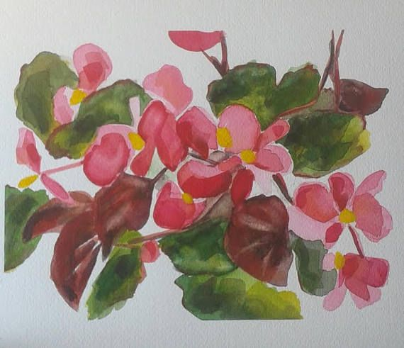 Begonia Flowers  original watercolour painting by Vicky