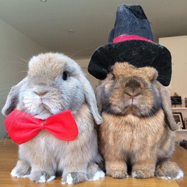 Sieh Dir doch mal dieses adrett gekleidete Kaninchen-Paar an.   21 kleine Tiere, die im Internet viel zu wenig Beachtung finden