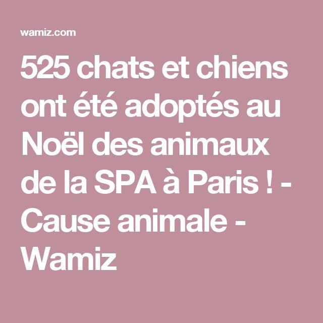 525 chats et chiens ont été adoptés au Noël des animaux de la SPA à Paris ! - Cause animale - Wamiz
