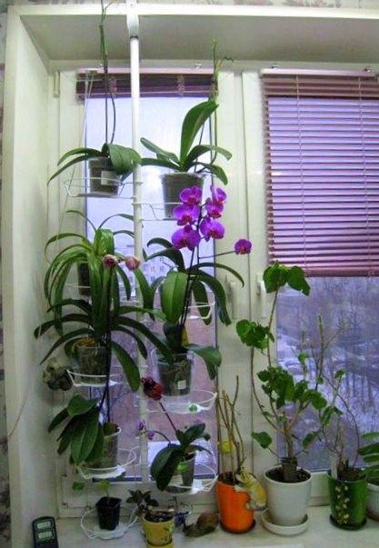 Уход и разведение - Орхидеи от AlevtinaSakura!