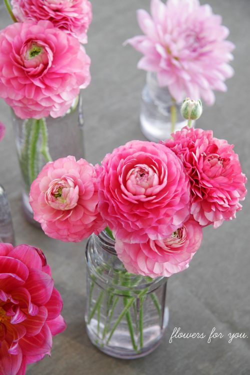 ranunculous: Pink Pink Pink, Pink Flowers, Color, Pretty Flowers, Beautiful Flowers, Bloom, Things, Mason Jars, Garden