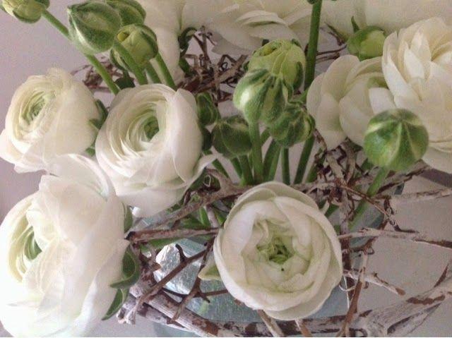 Op bedje van takken ( kransje) rusten de hoofdjes witte ranonkels - Ranunculus