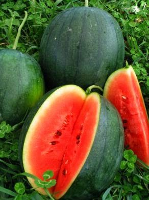 minecraft how to get watermelon seeds