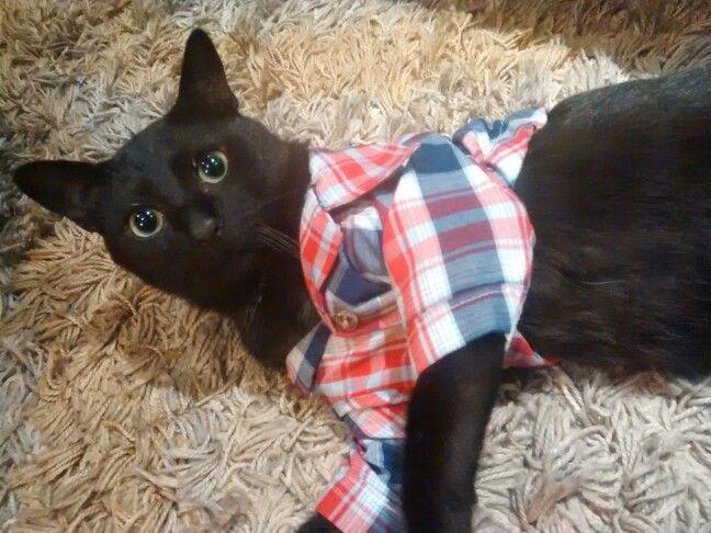 Gato vestido con camisa