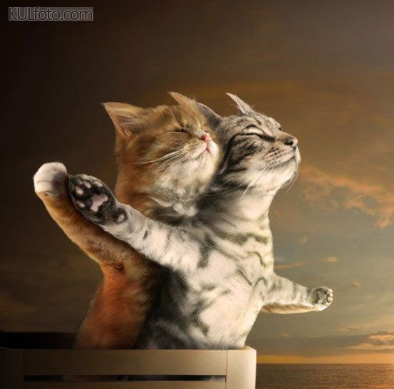 Cat Titanic - Two cats in love making a famous Titanic scene