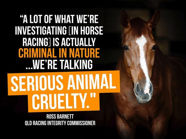 Race fixing, corruption, intimidation, threats, leaks, animal cruelty and bashings ... the Queensland Racing Integrity Commission — set up following Animals Australia & Animal Liberation Queensland investigations into brutal live baiting in greyhound racing — has now blown the lid off the dark underbelly of the state's horse racing industry (read more: www.bit.ly/2sRHWvS) Animals and gambling money are a TOXIC mix. PLEDGE to never bet on horse racing cruelty: www.AnimalsAus.org/t1I ◽️ ◽️ ◽️…