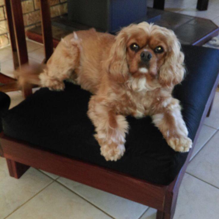 custom made doggie futon  www ausfutons     aus futons custom made futons custom futons   furniture shop  rh   ekonomikmobilyacarsisi