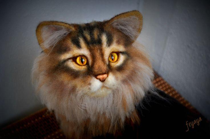 Австралийский кот.