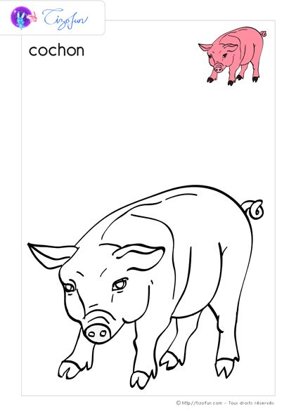 17 best ideas about dessin ferme on pinterest coloriage lapin prenom breton fille and dessin - Dessin cochon ...