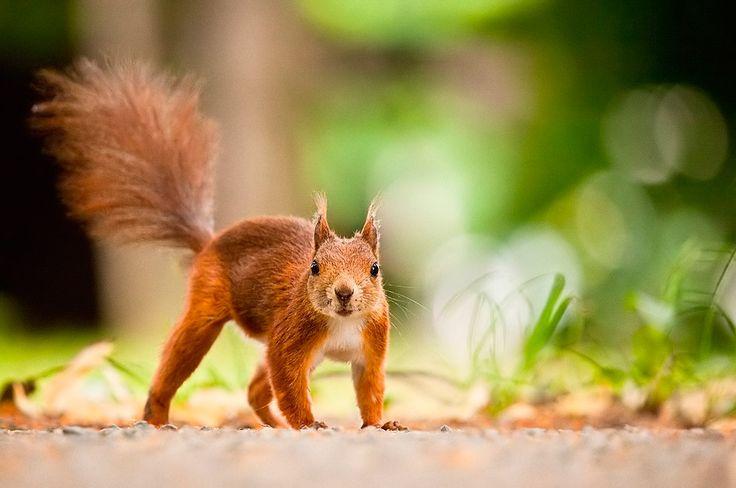 Фото животных от Robert Adamec