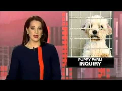 Peter Wicks 7 September 2015, 8:30pm 1 AnimalsNSWPolitics Committee chair Adam Marshall (Nats) address the puppy farm inquiry. The NSW puppy factory inquiry was set up to produce a whitewash report...