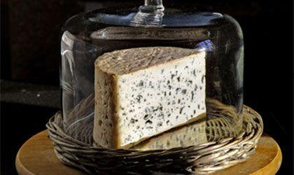 Bleu d'Auvergne, le fromage à pâte persillée au lait de chevre