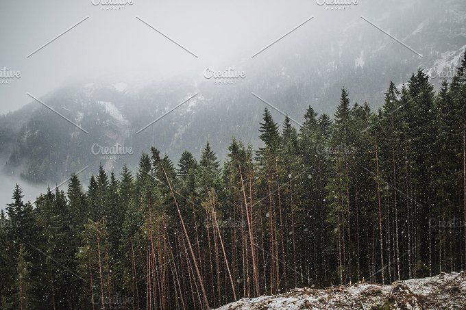 Winter Woods by Krisp_Krisp on @creativemarket