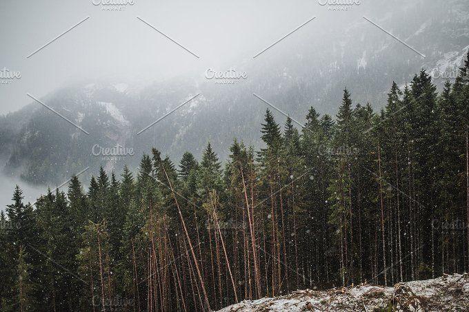 Winter Woods by Krisp_Krisp on @creativemarket