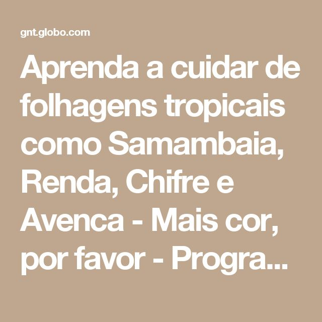 1000 ideias sobre Samambaias no Pinterest  Plantas Carnívoras