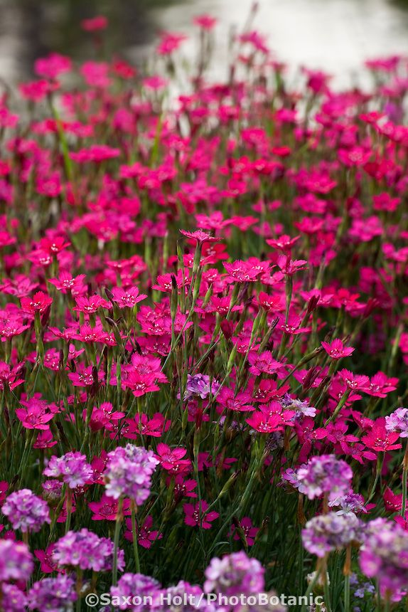 Flower Garden Ideas Illinois 67 best il wildflowers images on pinterest | illinois, wildflowers