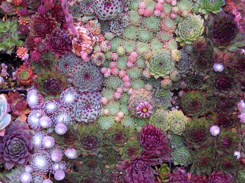 succulents. oh succulents.Coral Reef, Inspiration, Cacti, Green, Succulents Wall, Succulent Gardens, Succulent Plants, Colors Combinations, Flower