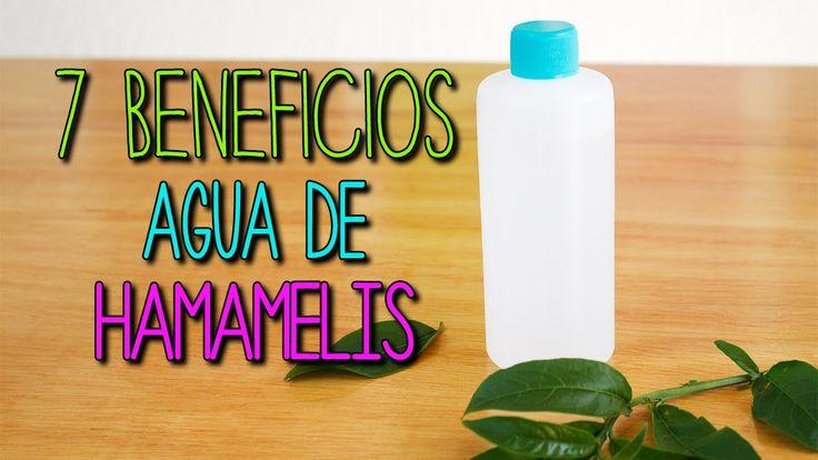 Agua de Hamamelis ¿Para qué sirve? - Cuidado facial y piel - Tips de Bel...