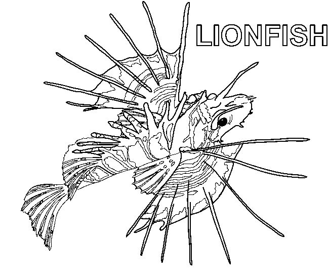 coloring pages for kids lionfish coloring page art for