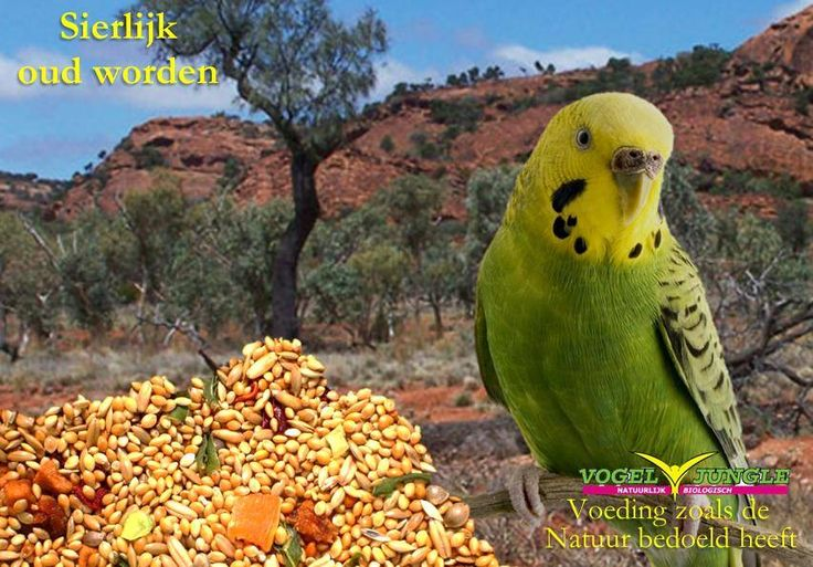 love your bird and give it healthy food