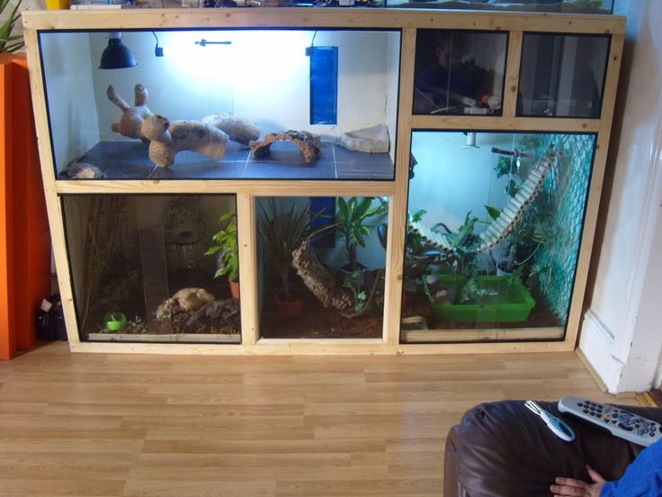 I think this might be my next years summer project. But bigger and for all the reptiles.