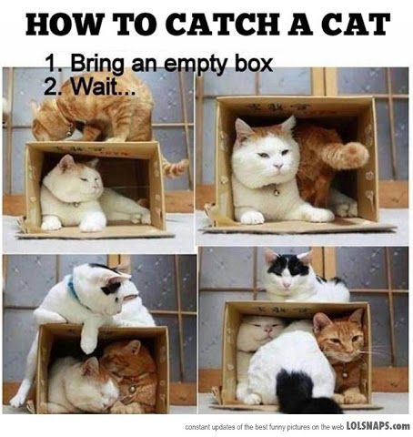 Clever loll this is so true, I don't understand why they love boxes. I would choose a bed over a box anyday