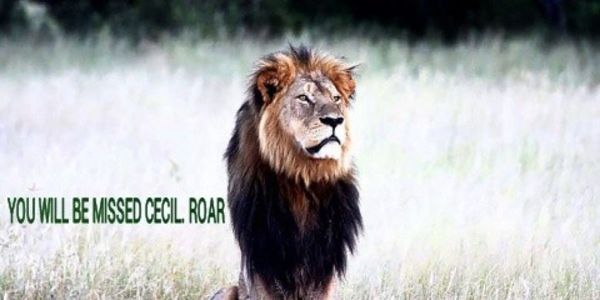 DEMAND JUSTICE FOR CECIL THE LION IN ZIMBABWE - Cecil was lured out the wildlife habitat, show w/a bow and arrow, still alive and suffering and then decapitated by a fucking dentist.  DEMAND JUSTICE FOR THE LEADER OF A PRIDE WHOSE CUBS MIGHT DIE!