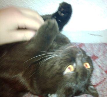 Das Portal für Katzen-Fans: Katzengesundheit, Katzenpflege, Katzen-Gedichte, Katzen-Fotos und vieles mehr  für Ihre Katze.