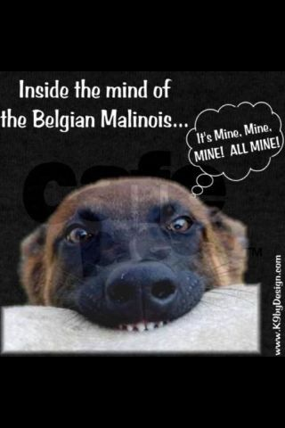 if you know Malinois.....