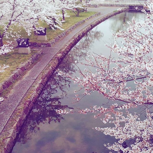 【seikanonomura】さんのInstagramをピンしています。 《春休み待ち遠しい🍃🌸🐝🌸 テスト期間早く終わって〜😣写真は入学式の時に撮った桜♡♡ #桜#春#春休み#大学#入学式#川#予定#いっぱい#写真#cherryblossom #Japan#university#students#spring#springvacation#river#》