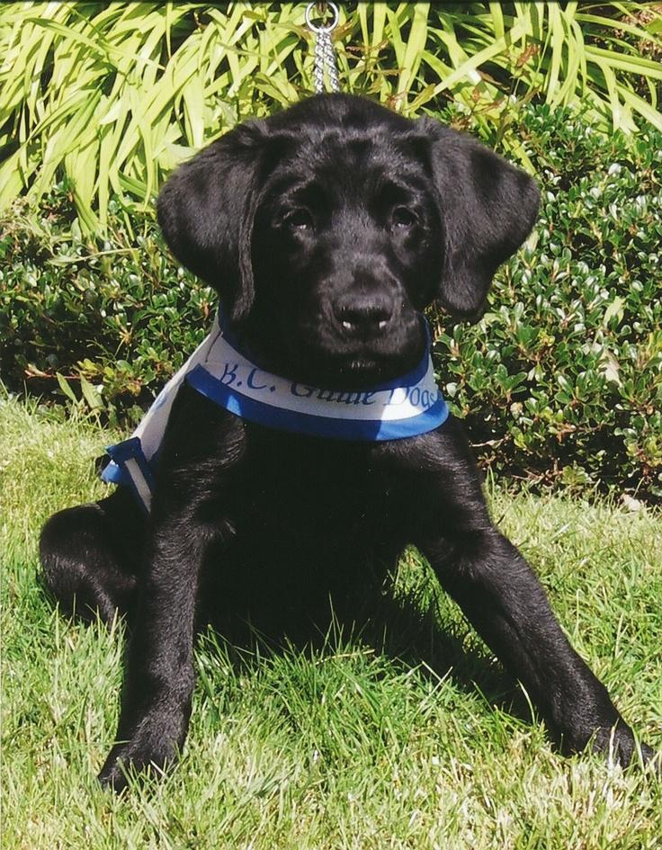 Another Adera Guide dog - Adera II!