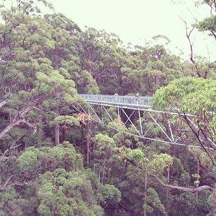 WESTERN AUSTRALIA: visit the Giant Tingle Tree in Walpole