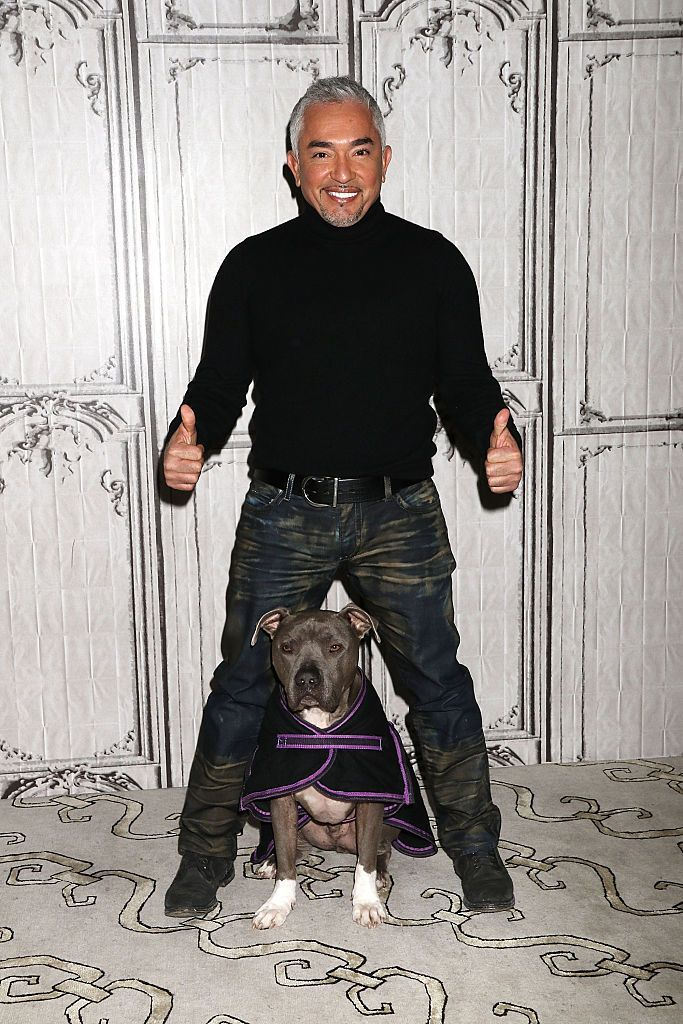 Cesar Millan, better known as the The Dog Whisperer, is known for offering tried-and-true dog-training solutions to frustrated, struggling pet owners. Among his most helpful tips are the following 10 that are sure to have even new dog owners leading the pack in no time.