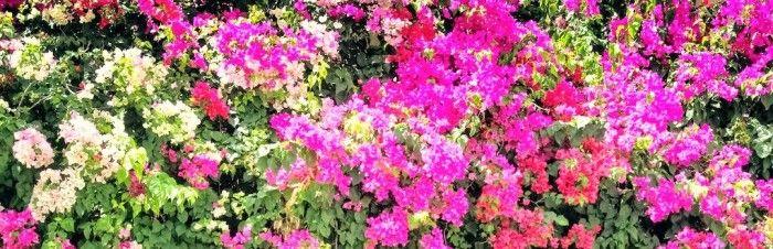 Enredaderas con flores