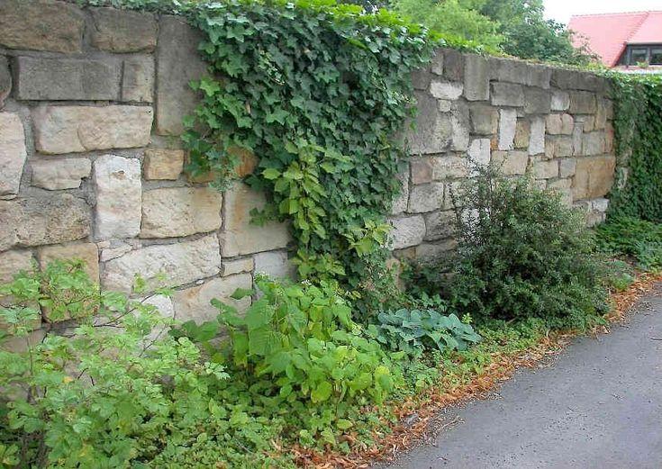 Etwas zurückgesetzte und begrünte Gartenmauer.