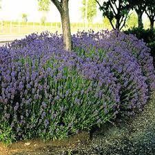 Afbeeldingsresultaat voor winterharde groene planten