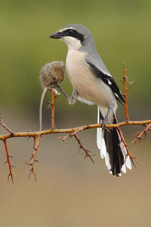 Anti Bird Strike Window Stickers Best Bird - Window decals for birds strikes