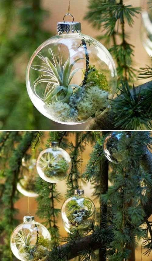 DIY Air Plant Ornaments. This Is So Cool!