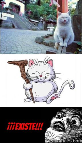 Memes de gatos - El maestro karin existe