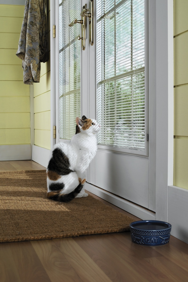 Convert A Corner Nook Into The Ultimate Squirrel Watching Window Seat For Your Pet