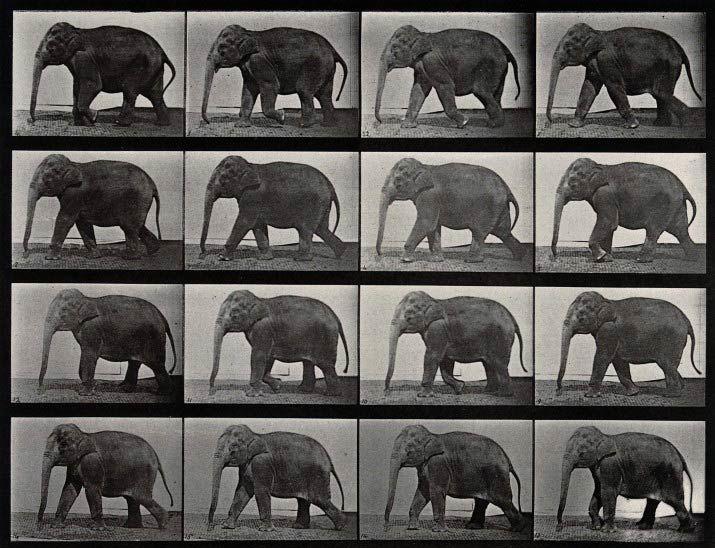 Eadweard Muybridge actual piece of original shrine. this is sacred to me..... elephants never forget.